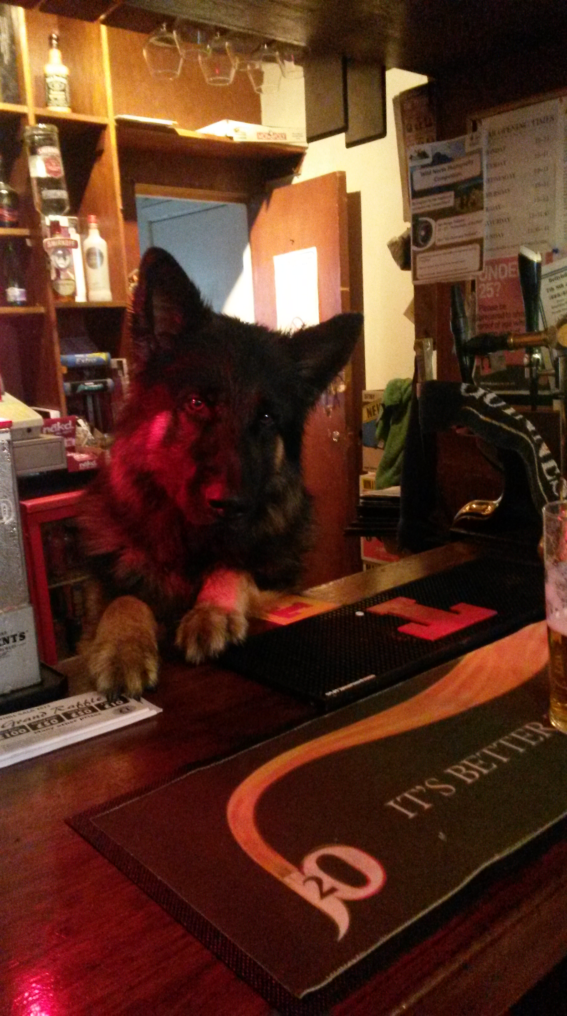So underpopulated is the village that at the Farr Bay Inn a german shepherd sometimes serves behind the bar