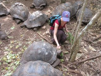 with giant tortoises on Prison Island